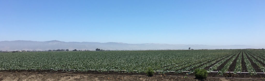 green fields of crops Salinas Valley